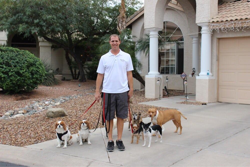 Dog Training Phoenix Yelp