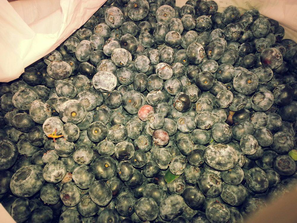 Miller Blueberry: 390 S County Road 315, Interlachen, FL