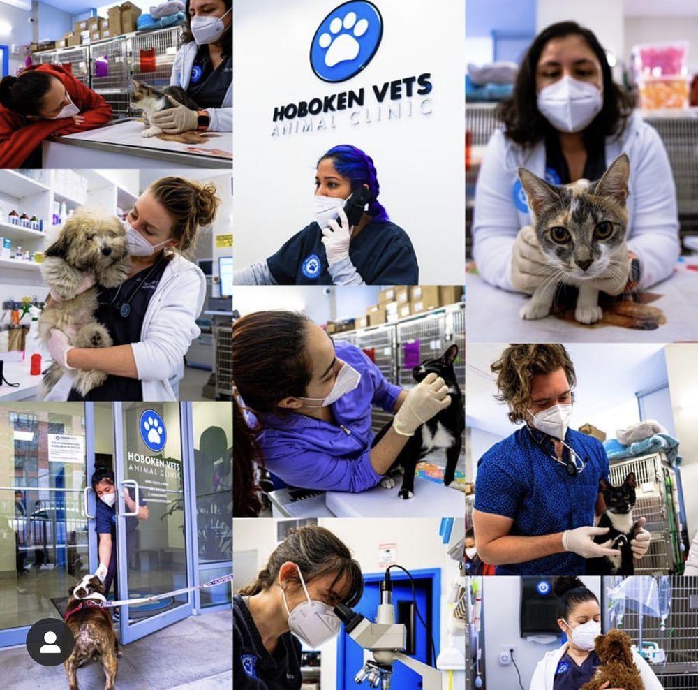 Hoboken Vets Animal Clinic: 1160 Maxwell Ln, Hoboken, NJ
