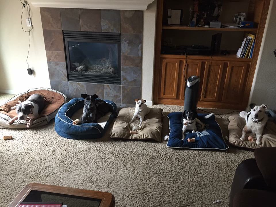Lucky Dog Training: Jackson, CA