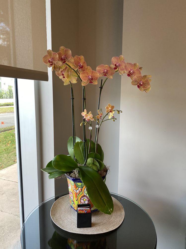 Coral Gables Dentistry: 3326 Ponce De Leon Blvd, Coral Gables, FL
