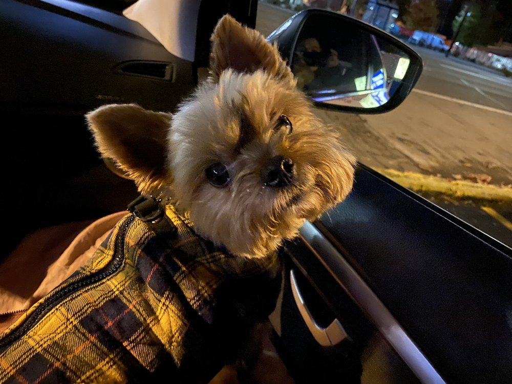 Pampered Pom Mobile Pet Spa: Hillsboro, OR