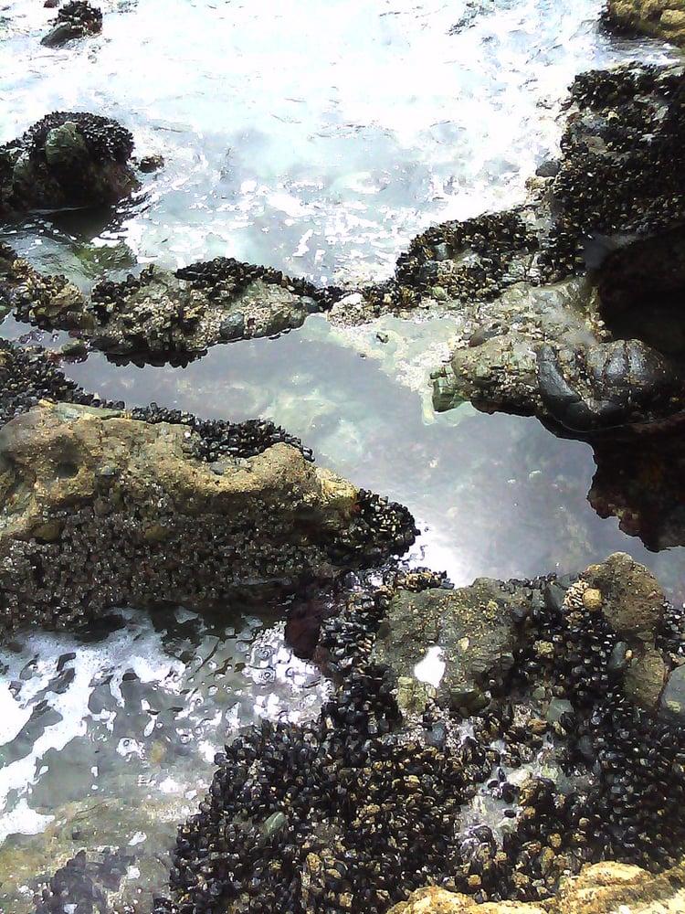 Tide Pools Yelp