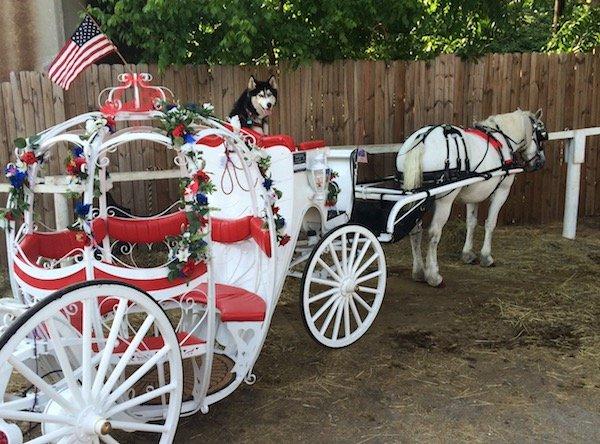 Nottingham Shire & Carriage For Hire: 556 Tift St, Atlanta, GA
