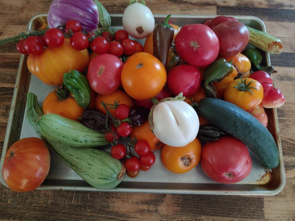 David's Garden Seeds: 5029 FM2504, Poteet, TX