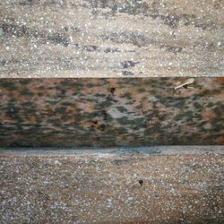 Good Photo Of Allways Roofing   Snohomish, WA, United States. Mold