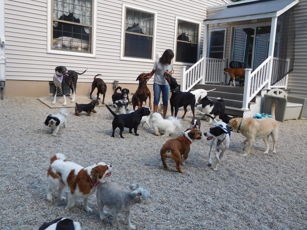 Canine Magic Dog Training Company: 8 Twin Pines Ave, Billerica, MA