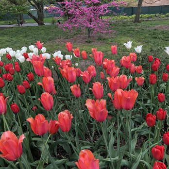 photo of brooklyn botanic garden brooklyn ny united states - Brooklyn Botanic Garden