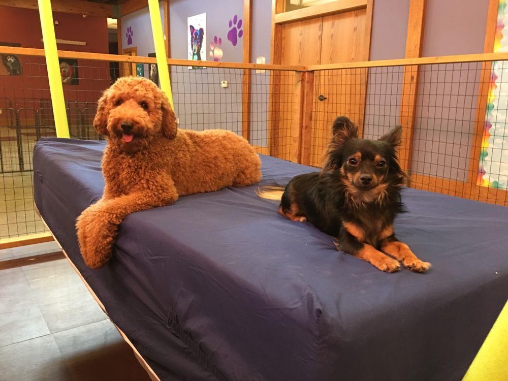 Pixee's Paws Pet Palace: 112 W Randol Mill Rd, Arlington, TX