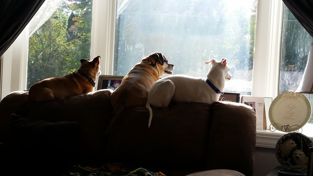 All Creatures Pet Sitting Service: 211 15th Ave N, Wisconsin Rapids, WI