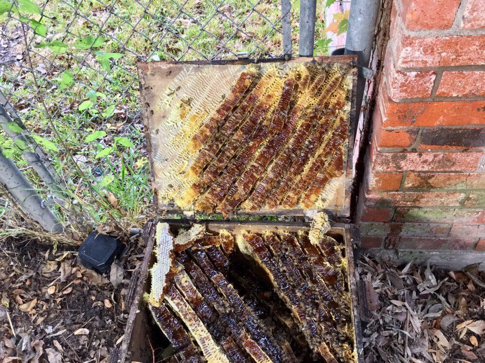 North Bosque Honey: 123 Pecan, China Spring, TX