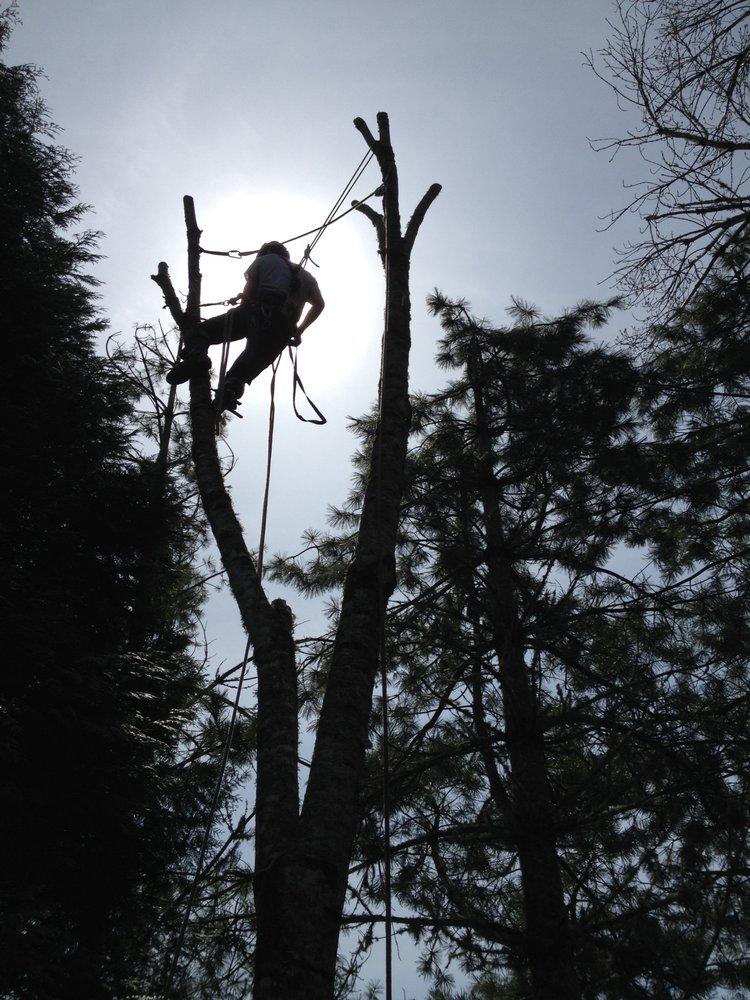 Seaders Tree Care: Corvallis, OR