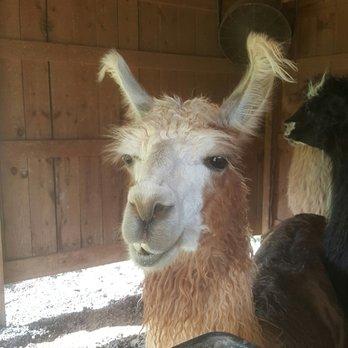 Divine Llama Vineyard 72 Photos 27 Reviews Wineries 5349