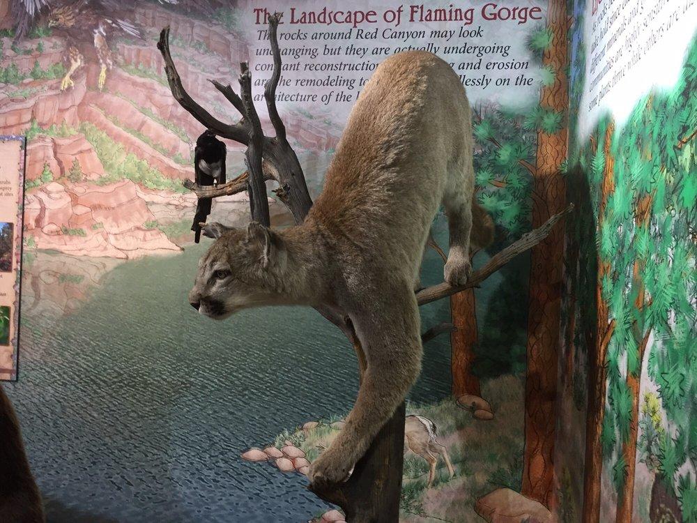 Red Canyon Visitor Center: 1475 Red Cyn, Dutch John, UT