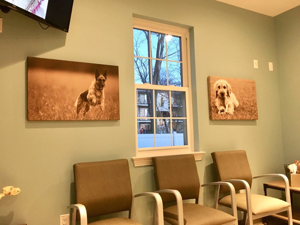 North Penn Animal Hospital