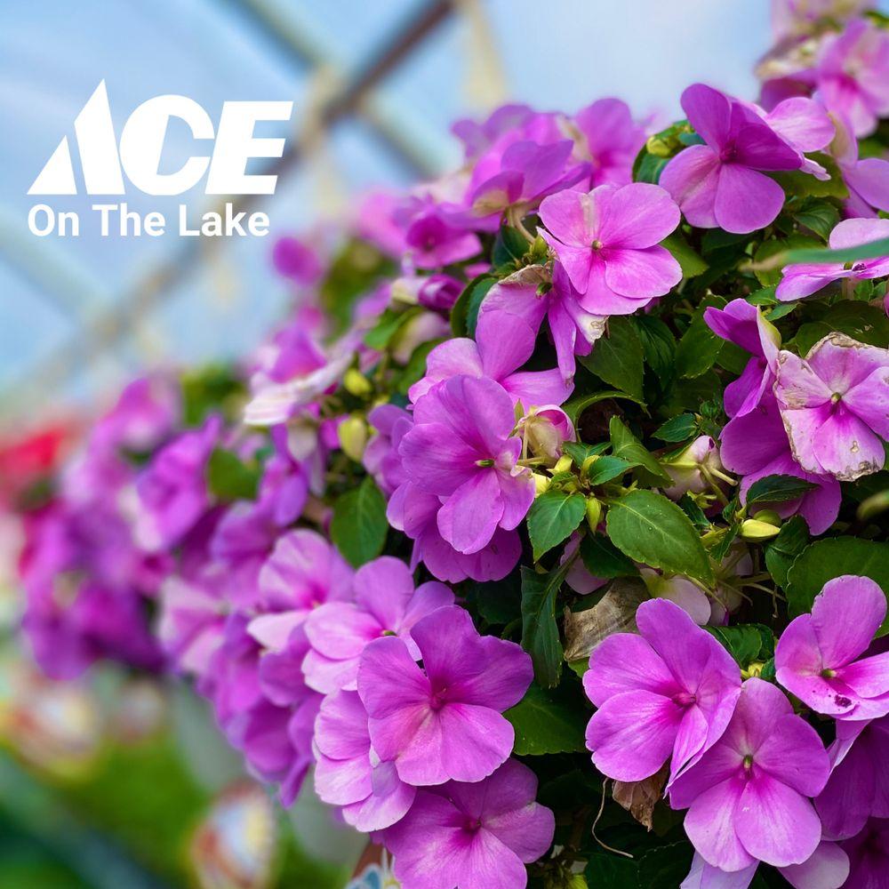 Ace On The Lake: 600 Paul Bunyan Dr S, Bemidji, MN
