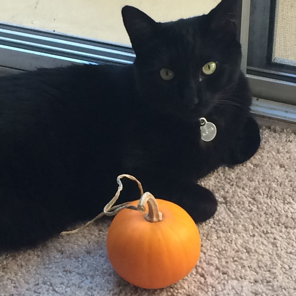 Cat Care by Brittany: Concord, CA