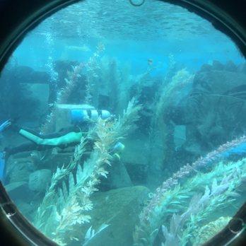 Finding Nemo Submarine Voyage - 283 Photos & 153 Reviews