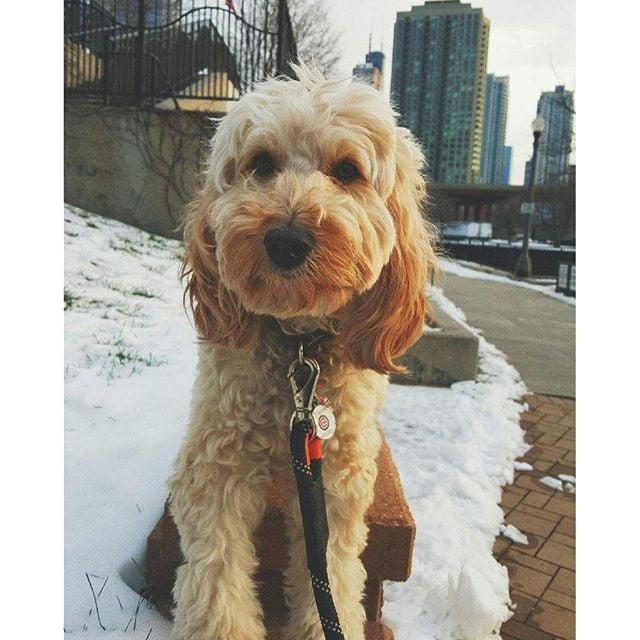Dog Boarding Near Chicago Il