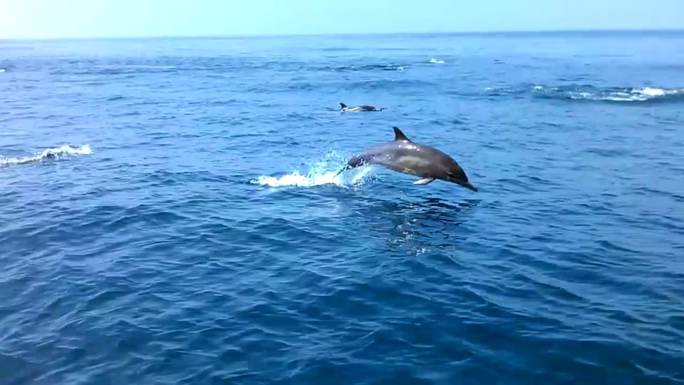 July2013 dolphins long trip but it was a great for Marina del rey fishing report