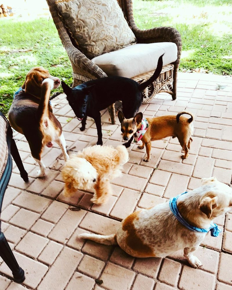 Club Hollywoof Inn & Suites Doggie Daycare and Boarding: 2417 E South St, Orlando, FL