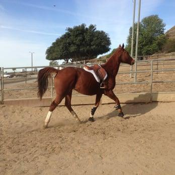 Sycamore Canyon Equestrian Center 14 Photos Horse