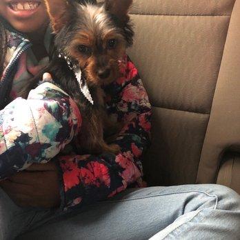 Diamond Dog Pet Salon Spa Pet Groomers 11122 N Rockwell Ave