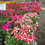 Maria gardens center 10 photos nurseries gardening 10301 w 130th st north royalton oh for Maria s garden center