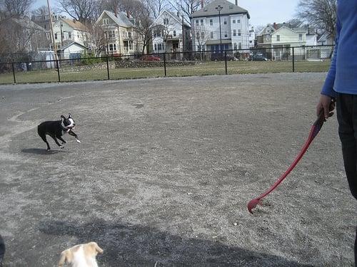 Nunziato Field Dog Park Somerville Ma