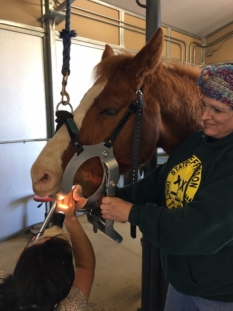 Jen Powers, DVM - Above and Beyond Animal Care: 22509 Old Alturas Rd, Bella Vista, CA