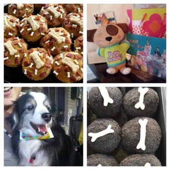 Beautiful Photo Of The Pooch Patio   Dallas, TX, United States. Pupcakes In The