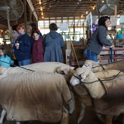 Maryland Sheep & Wool Festival - 14 Photos & 12 Reviews