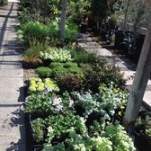 Photo Of Bellefontaine Nursery Pasadena Ca United States Some The Shade