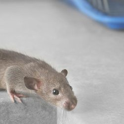 Do It Right Rodent Proofing - 12 Photos & 42 Reviews - Pest Control