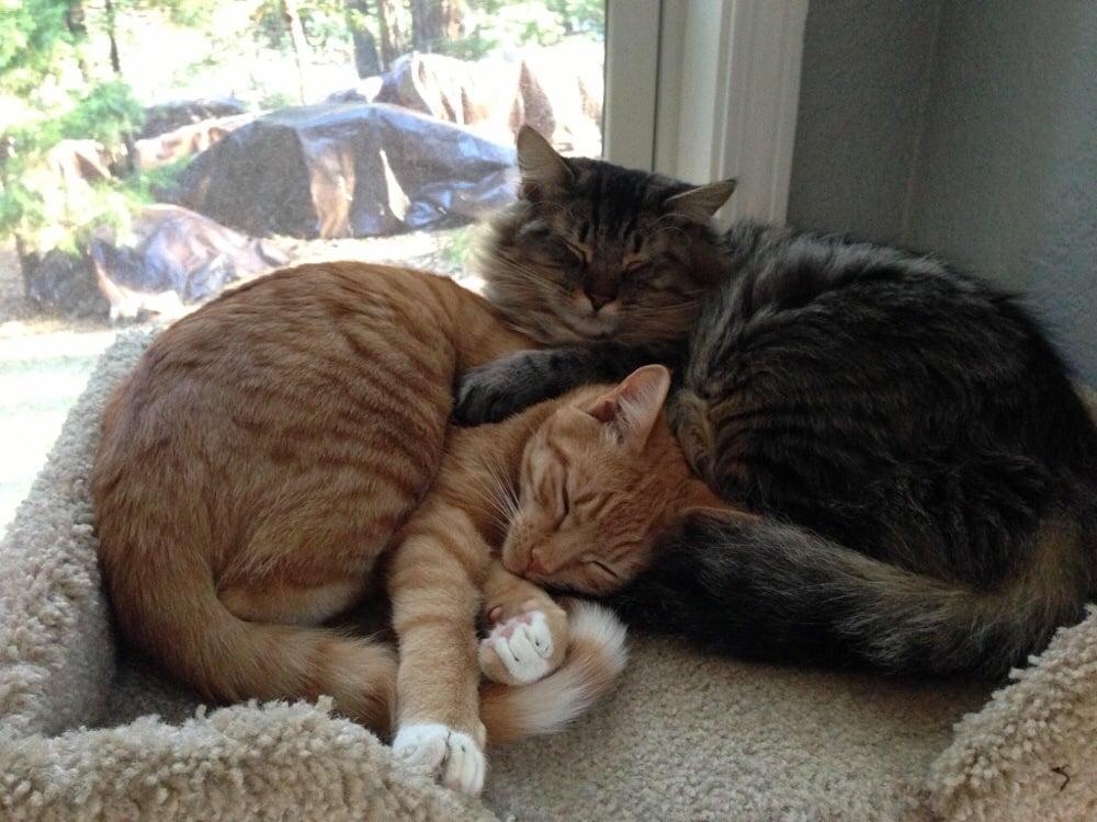 Cat Rescue Auburn Ca