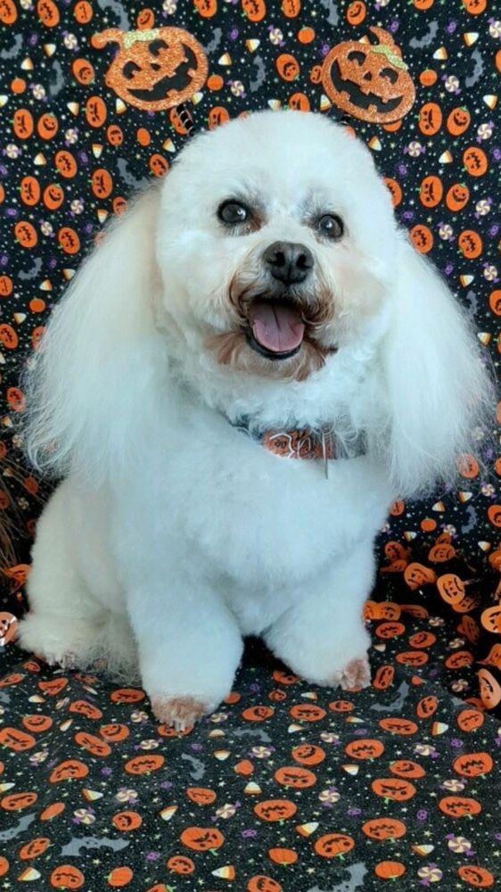 Bubbles & Bows Pet Spa: 1199 Escalon Ave, Escalon, CA