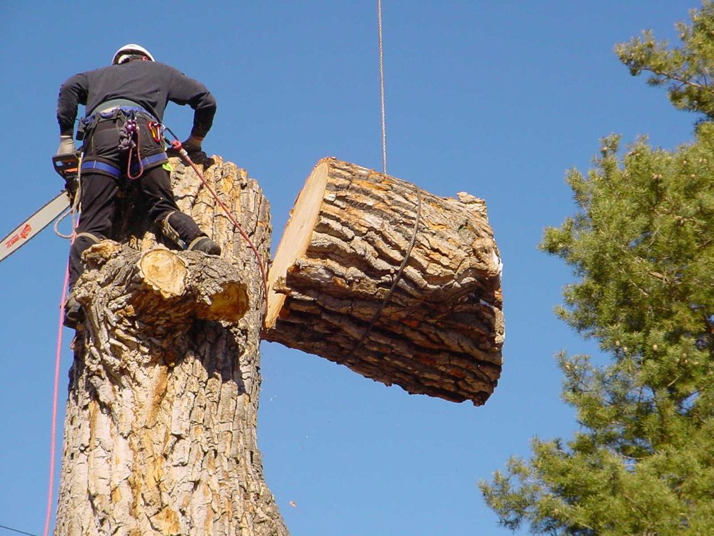 Chipps Tree Service: 10445 S Indian Trl, Modoc, IN