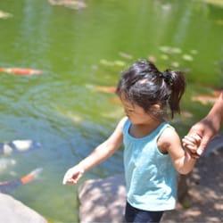 Earl burns miller japanese garden 1027 photos 254 for Koi fish pond csulb