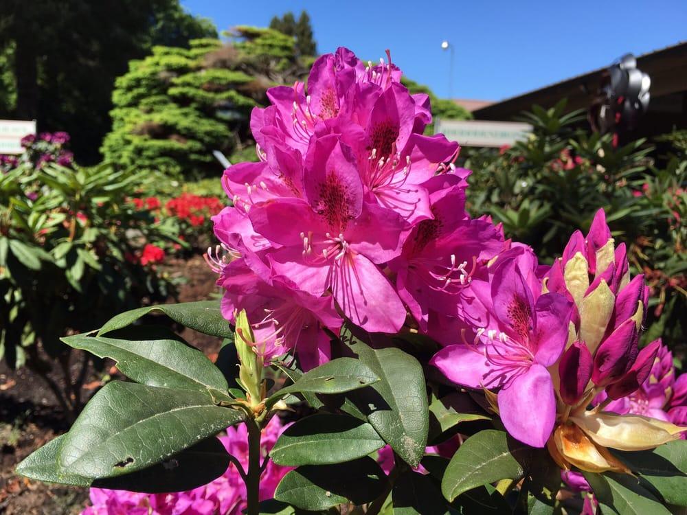 Whitney Gardens: 306264 US Highway 101, Brinnon, WA