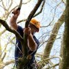 Find Local Tree Service: 8 Roosevelt St, Bay Shore, NY