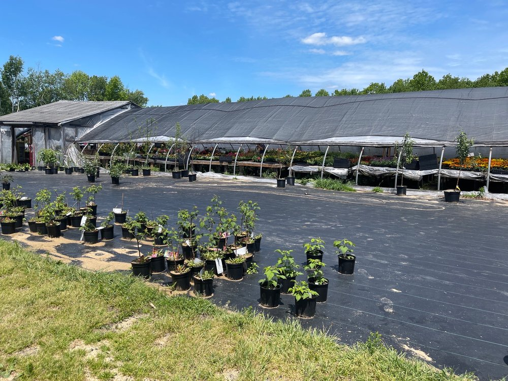 Faught's Greenhouse: 8668 Rt 580 Hwy, Cherry Tree, PA