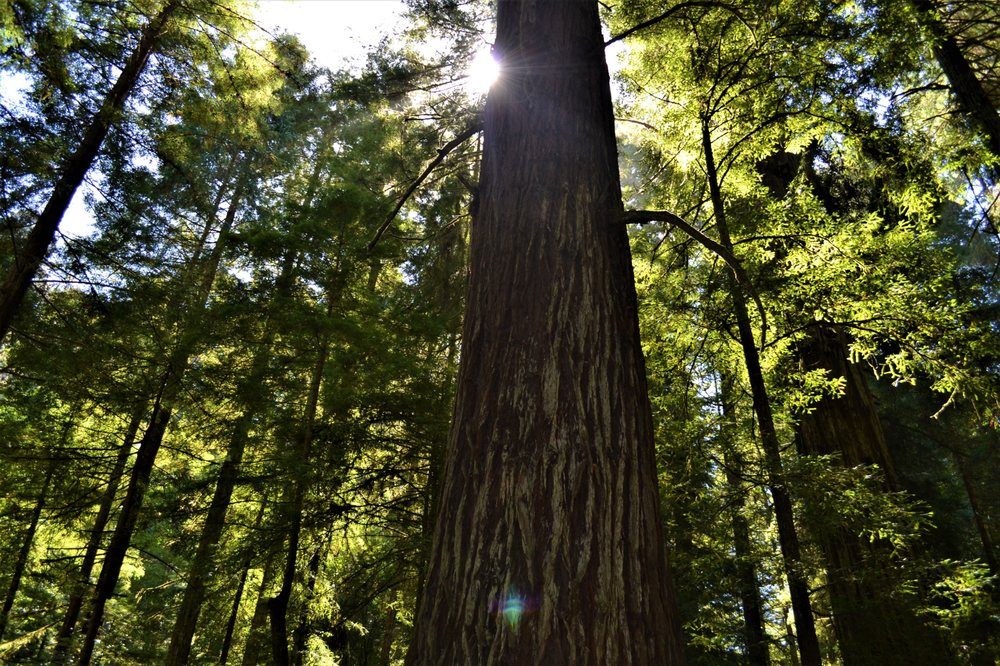 Jedediah Smith Redwoods State Park: 1440 US 199, Crescent City, CA