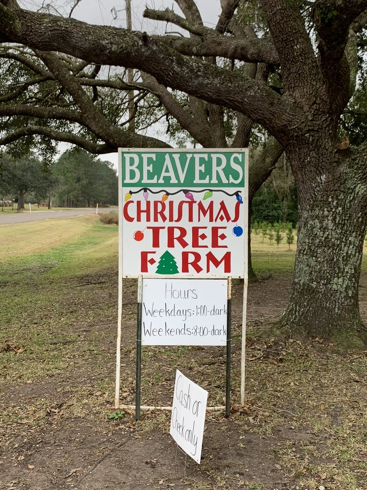 Beaver's Christmas Tree Farm: 4382 Fm 1009, Nome, TX