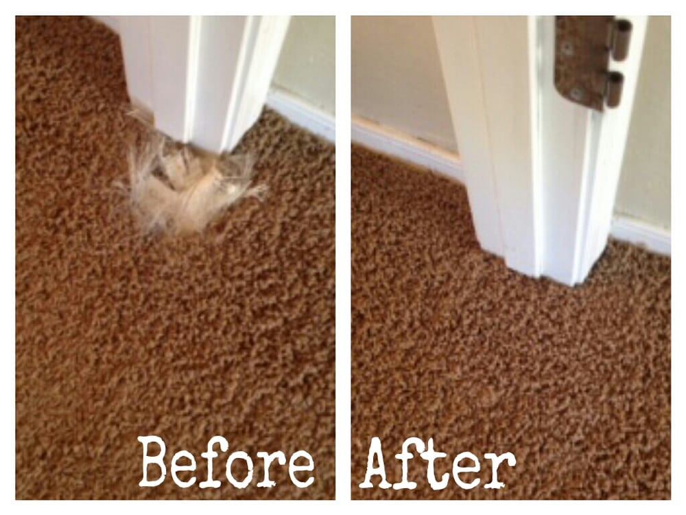 Premium Carpet Repair & Cleaning