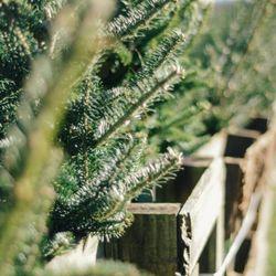 Spiech Tree Farm Christmas Trees 53937 Cr 657 Paw Paw Mi