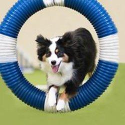 Dog Training Richardson Tx
