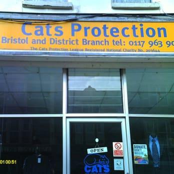 Cats Protection League Bristol Uk