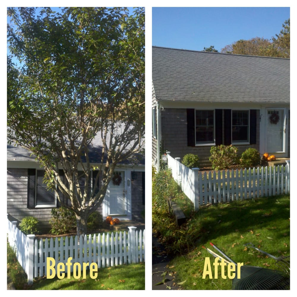 Small Tree Removal Before And After