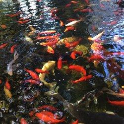 Laguna Koi Ponds - Ponds - Photo Gallery