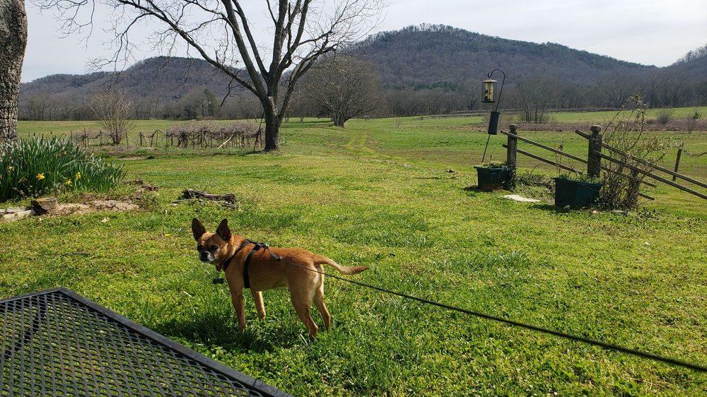 Wills Creek Vineyards: 10522 Duck Springs Rd, Attalla, AL